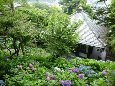 170628-鎌倉 長谷観音 (25)