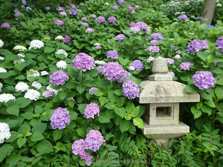 170628-鎌倉 長谷観音 (45)