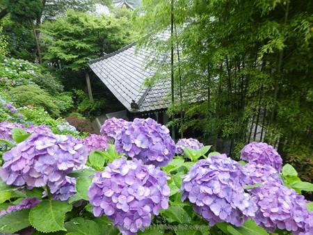 170628-鎌倉 長谷観音 (136)
