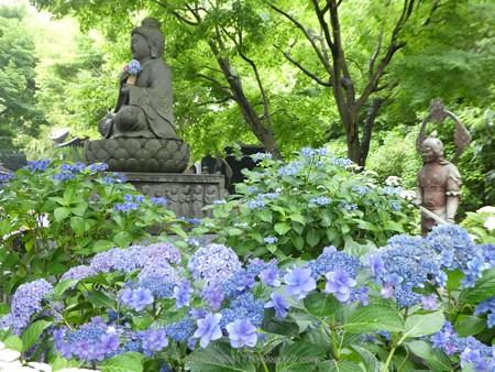 170628-鎌倉 長谷観音 (187)