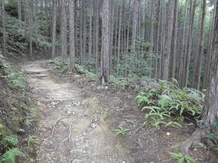 160325-熊野古道 小辺路 (19)
