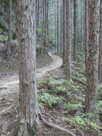 160325-熊野古道 小辺路 (20)