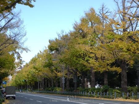 171112-山下公園通り (33)