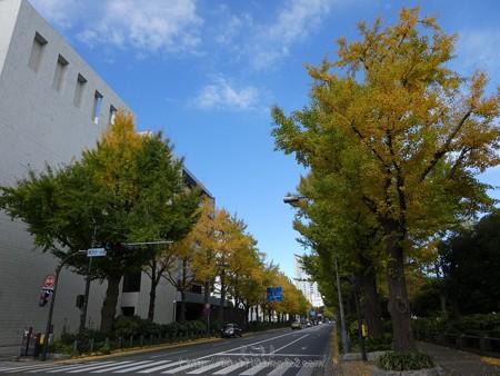 171112-山下公園通り (41)