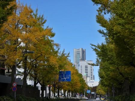 171112-山下公園通り (46)
