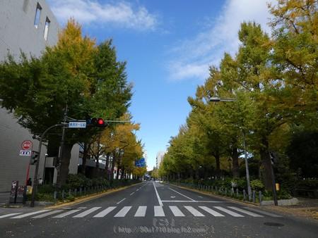 171112-山下公園通り (48)