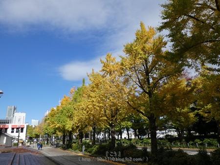 171112-山下公園通り (57)