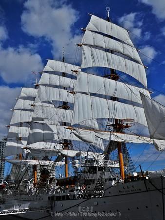 171112-日本丸 総帆展帆 (76)