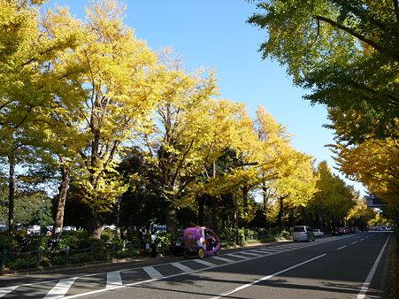 091123-山下公園通 (71)