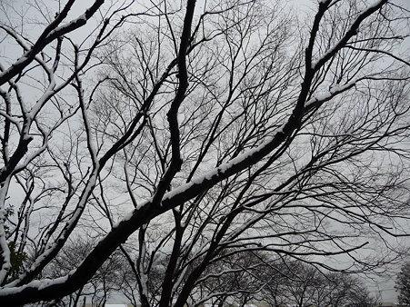 100202-雪(朝) (20)