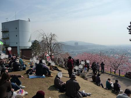 100223-松田山 河津桜 (79)