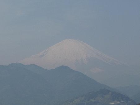 100223-松田山 河津桜 (73)