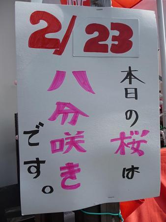 100223-松田山 河津桜 (84)