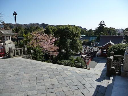 100311-八幡さま (37)