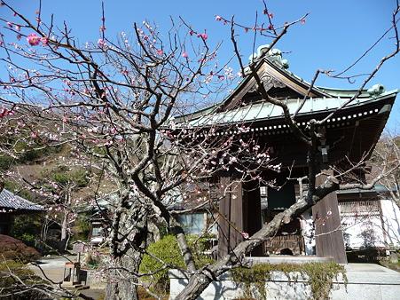 110225-海蔵寺 (13)