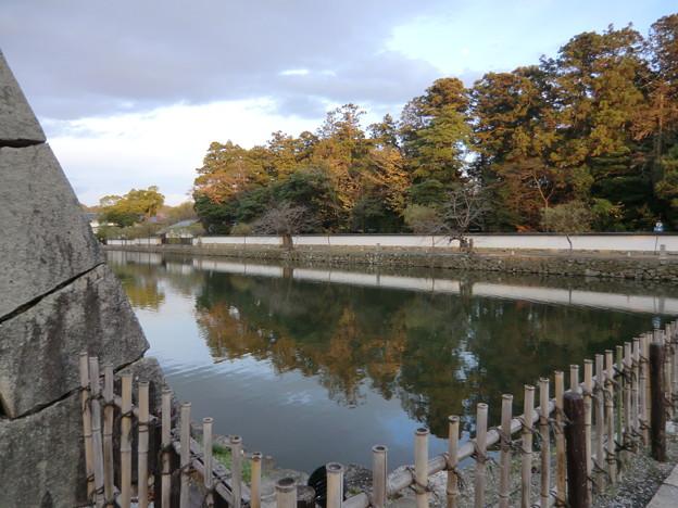 彦根城の散紅葉とひこにゃん (50)