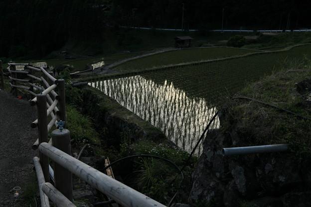 四谷千枚田田園