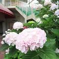 写真: 須磨浦山上遊園