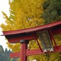 神社と黄葉