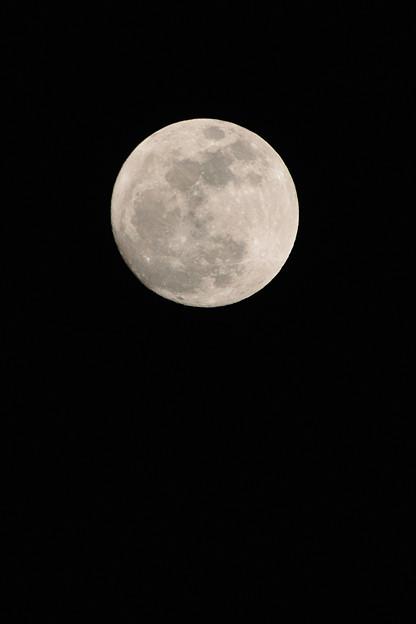 写真: 今年最初のお月様