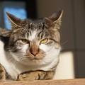 カメラ目線の猫@城ケ島