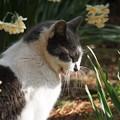 花と猫2@城ケ島