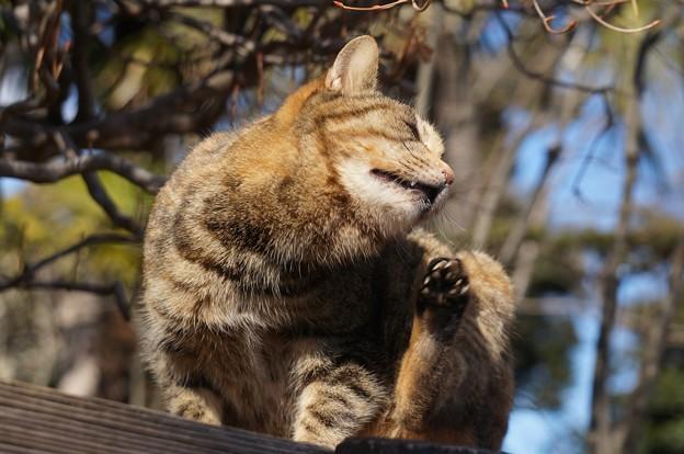 Photos: 日向ぼっこ猫2