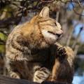日向ぼっこ猫2