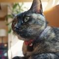 Photos: 凝視する猫