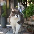 迫りくる猫