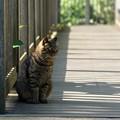 通路を警備する猫