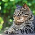 貫録ある猫
