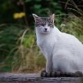 きれいな顔の猫