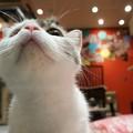 猫のあごの下