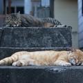 寝る猫たち1