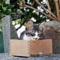 賽銭箱と子猫