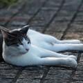 写真: キリッとした猫2