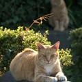写真: 日向の猫と日陰の猫