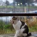 あくび猫2