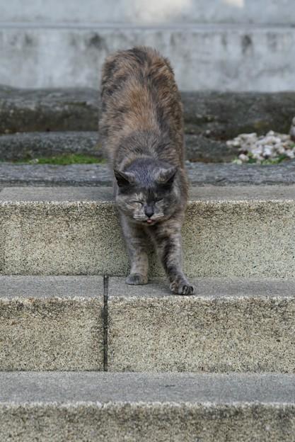 舌しまい忘れ猫2