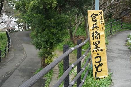 2017年4月9日 西公園 桜 福岡 さくら 写真 (34)