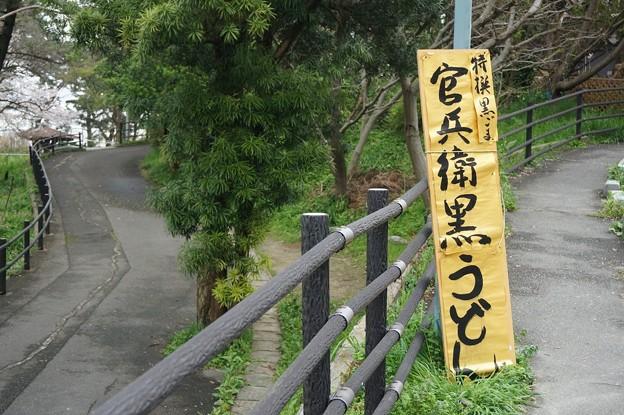 写真: 2017年4月9日 西公園 桜 福岡 さくら 写真 (34)