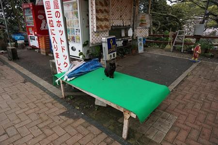 2017年4月9日 西公園 桜 福岡 さくら 写真 (41)