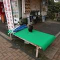 写真: 2017年4月9日 西公園 桜 福岡 さくら 写真 (41)