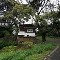 写真: 2017年4月9日 西公園 桜 福岡 さくら 写真 (70)