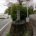 写真: 2017年4月9日 西公園 桜 福岡 さくら 写真 (99)