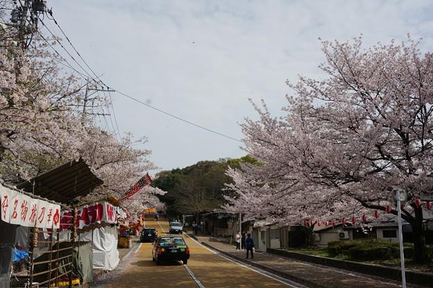 写真: 2017年4月9日 西公園 桜 福岡 さくら 写真 (142)