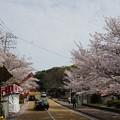 Photos: 2017年4月9日 西公園 桜 福岡 さくら 写真 (142)