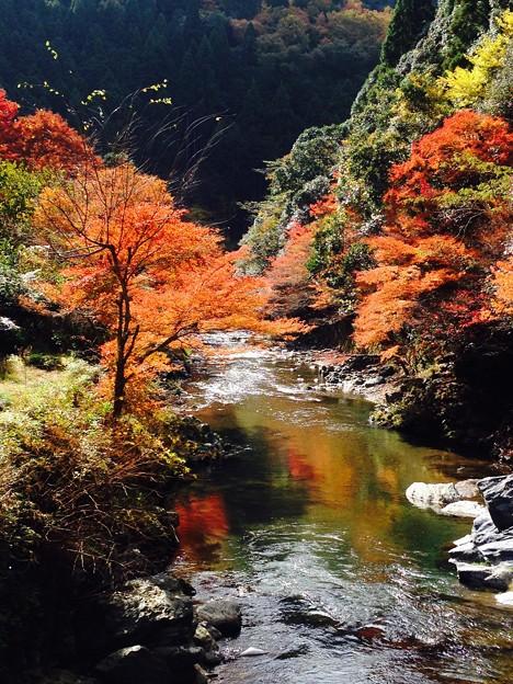 2016秋 清滝
