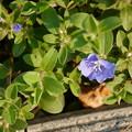 街路樹の植え込みの花